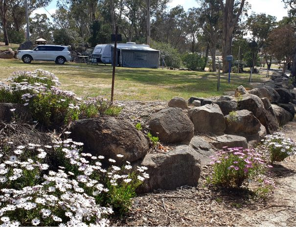 Top-Of-The-Town-Tourist-Park-Stanthorpe-Camping